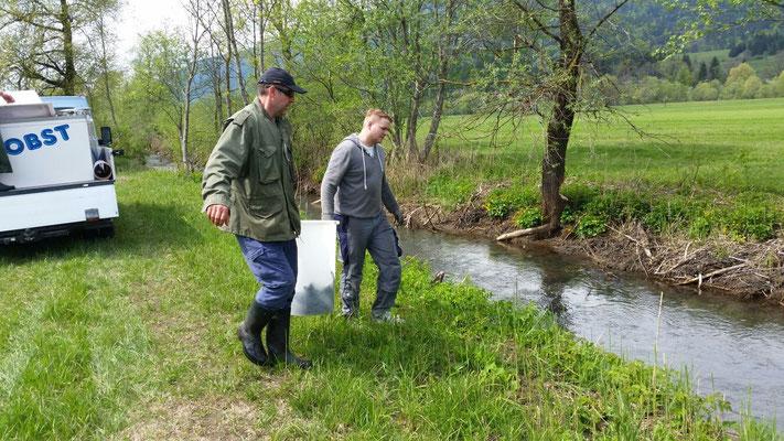 Fischbesatz in Moosbach