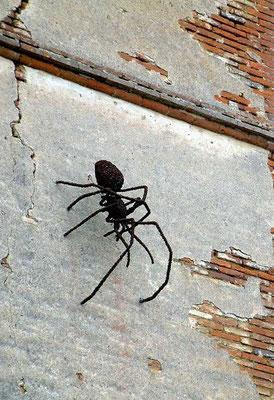 Deev Vanorbeek, artdeev     araignée metal art sculpture  50 x 100 x 120 cm                                 www.vanorbeek.com                                            fil de fer , metal art,  sculpture d'insecte, recyclage