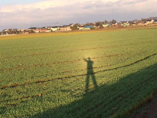 朝日で自分の影に後光がさしています。