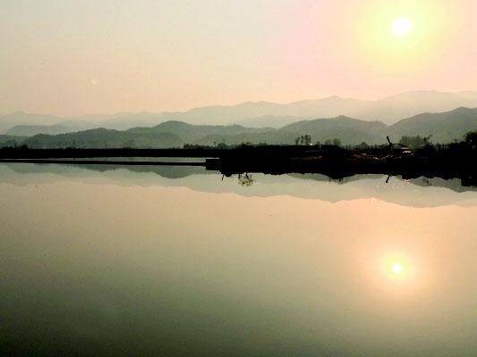 朝早く撮った水がはった水田