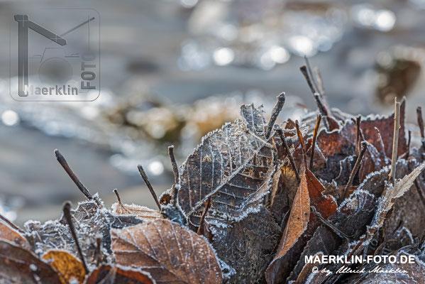 Frost im Naturpark Schönbuch, Raureif auf Laub