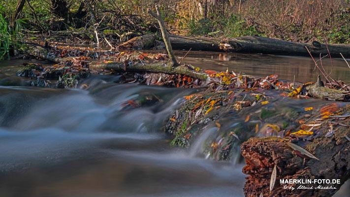 Bacherlebnispfad, Steinach bei Iselshausen, Herbstlaub im fließenden Wasser