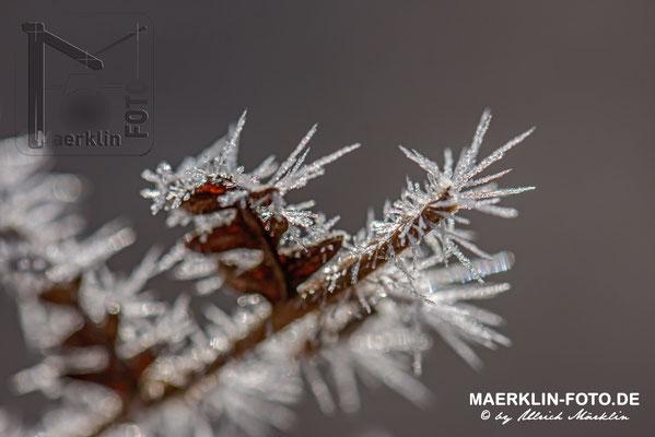 Frost im Naturpark Schönbuch, Frostzäpchen