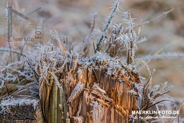 Frost im Naturpark Schönbuch, Frostzäpchen auf einem Holzpfahl