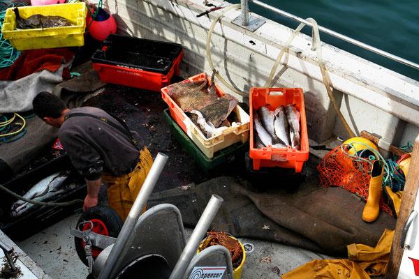 Fischfang vom Morgen in Portmagee
