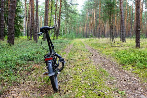 ... deswegen habe ich das Rad eigentlich nur durch den Wald geschoben :-(