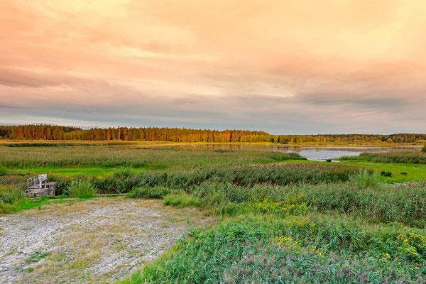 Teich in unmittelbarer Nähe der Wurfhöhle/Kernzone des Reviers (Insider-Info)