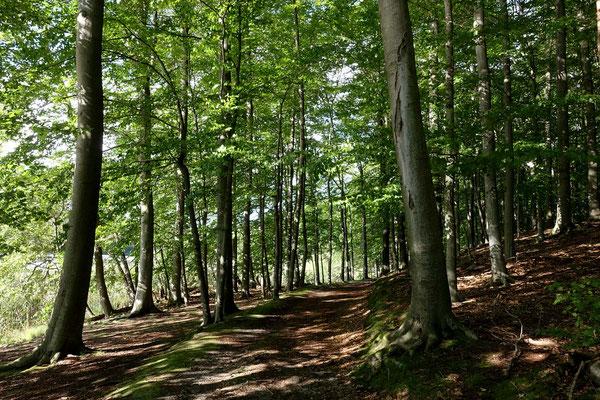 UNESCO Biosphärenreservat Buchenwald von Chorin (A)