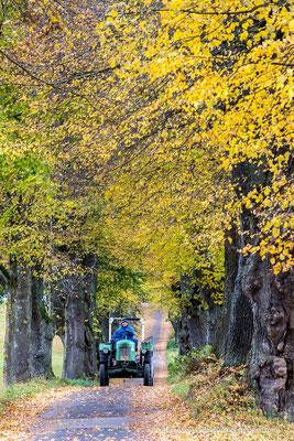 Kurfürstenalle bei Marktoberdorf im Herbst