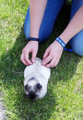 Ein seltener Patient, aber auch bei Kleintieren kann Physiotherapie helfen.