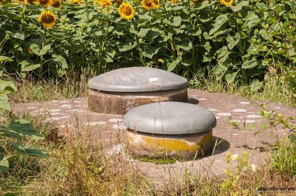 Brunnenstube / Wasserfassung