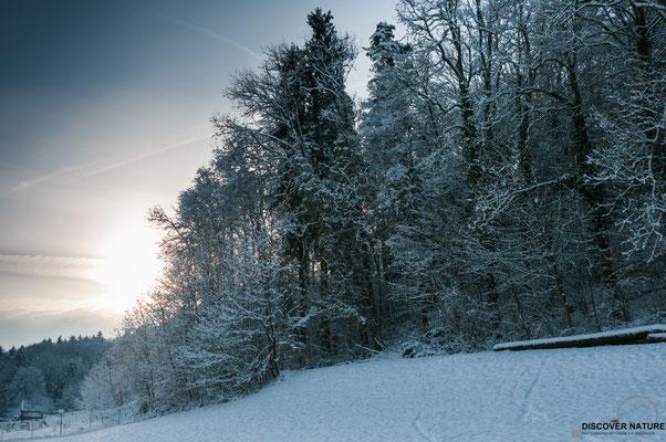 Winterlandschaft - Kanton Zürich