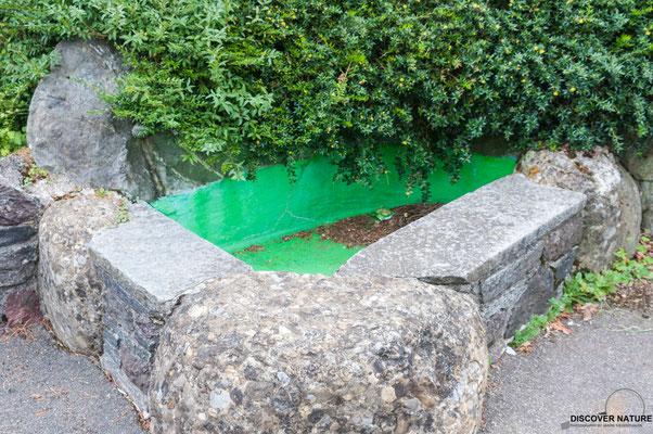 Brunnen Schulhaus Sonnenberg