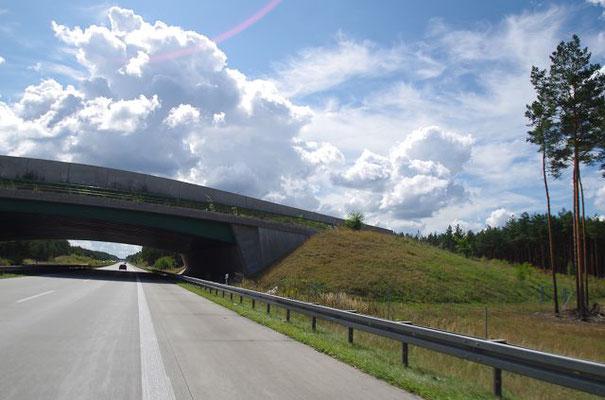 Wildbrücken, auf denen alle möglichen Tiere gefährliche Straßen, z.B. Autobahnen, überqueren können, sind ideal, aber sehr teuer!