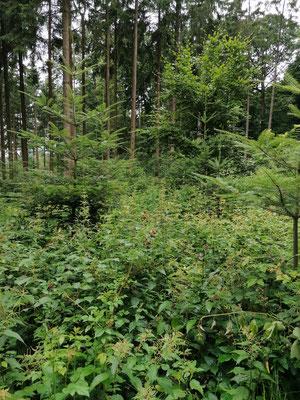 Überzeugende Waldbilder ...