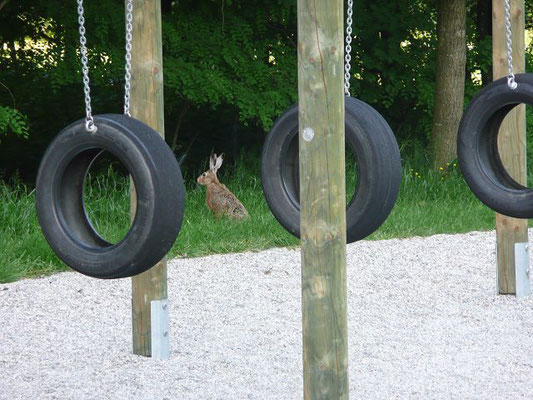 Spielplätze können Hasen auch gefallen.