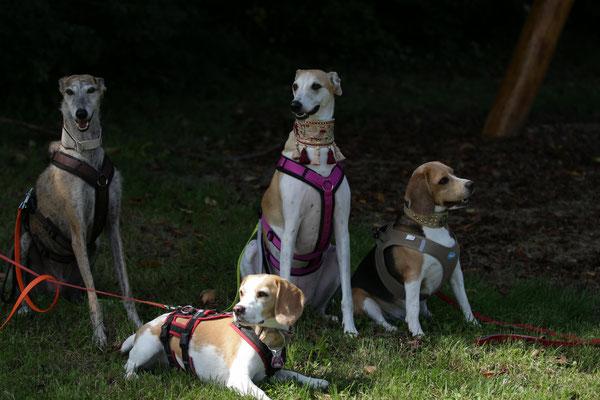 Henry, Nele, Trixi und Bella