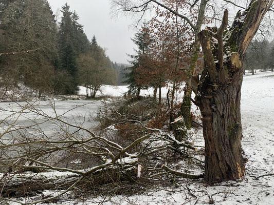Baumschnitt Winter 20/21