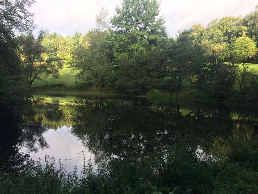 der renaturierte Teich