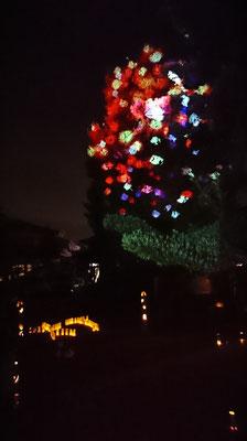 大銀杏が光の宿り木に