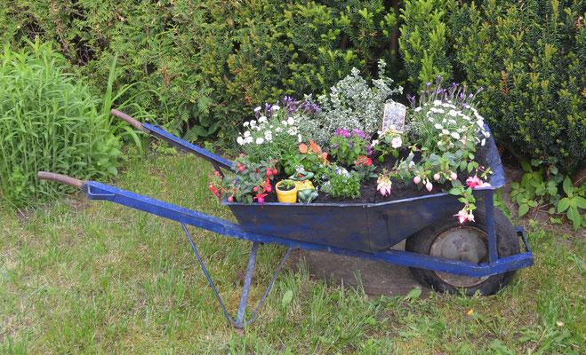 meine alte Schubkarre wird ein bepflanztes Dekoelement im Garten