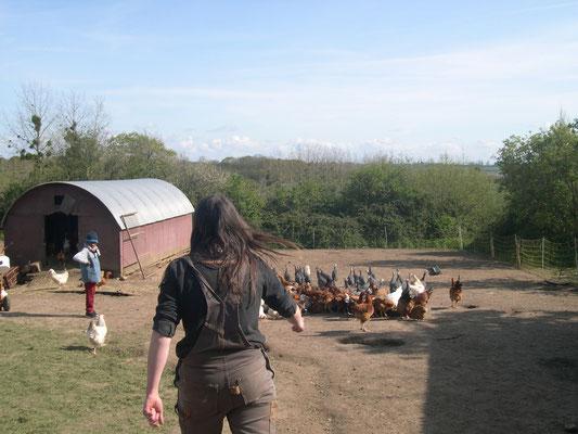 Elodie va nourrir les poulets et les pintades...