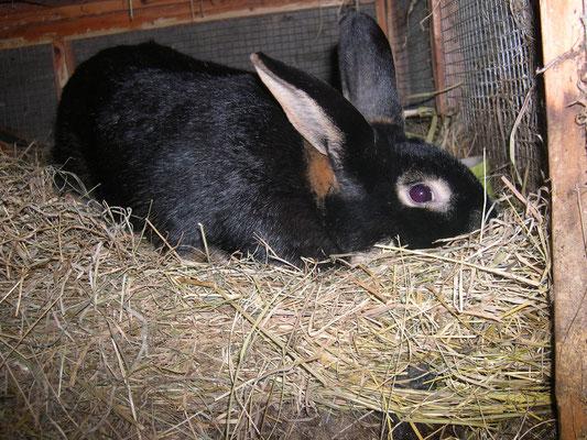 pas de jaloux, le lapin lui aussi a eu le droit à sa séance photo !