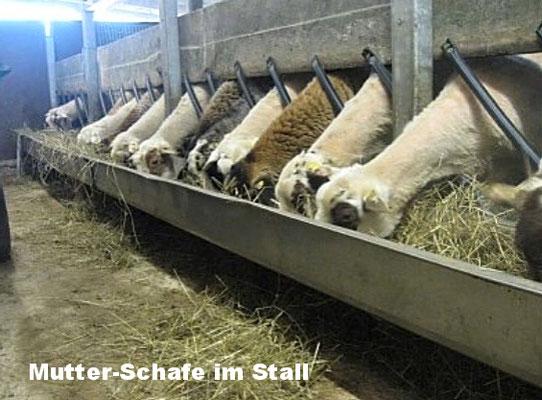 Schaf- und Kaninchenzucht
