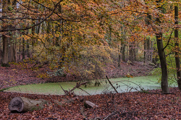 The Netherlands Amsterdamse Bos