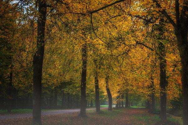 Bos Wood Autumn October