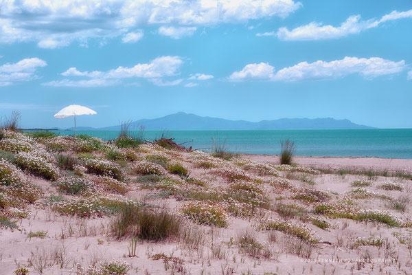 Italy Tuscany Grosseto Landscape Beach