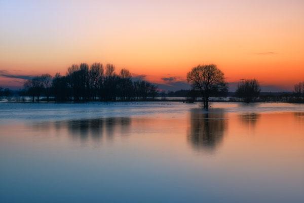 Gorinchem Merwede High Tide Winter Netherlands Waterscape Sunset Trees
