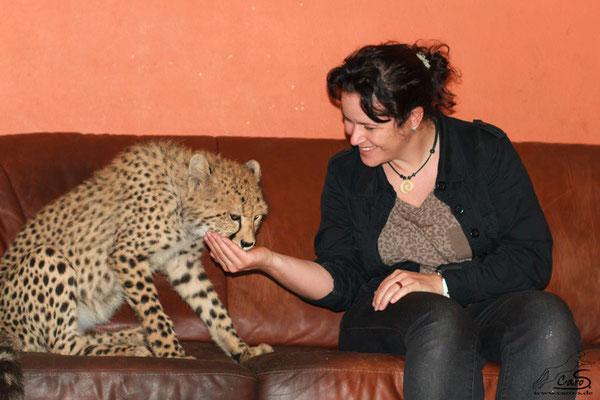 Fütterung eines Gepardenjunges