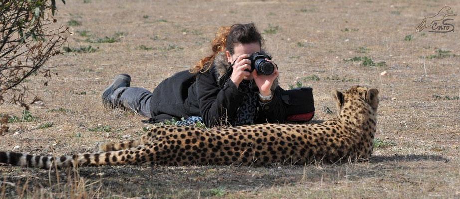 Gepard wird von mir fotografiert