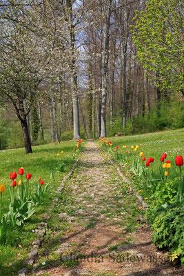 Tuplenweg im Weimarer Goethepark