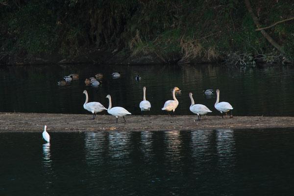 The Birds in Yamaga