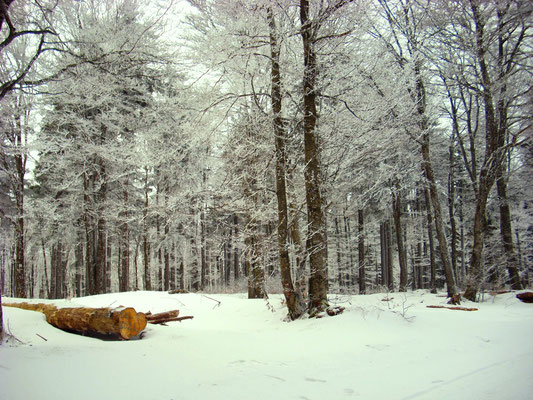 le calme en hiver