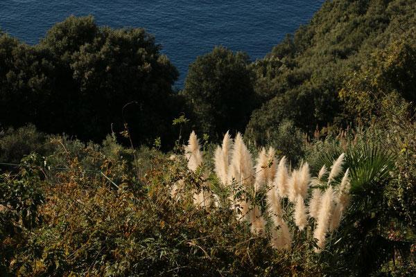 Ligurien | Cinque Terre | bei Levanto