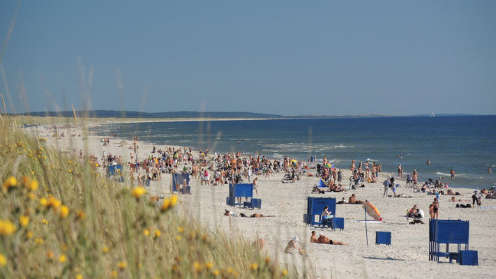 Beach at Curonian Spit National Park - Klaipeda - Lithuania