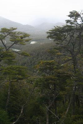 South of Puerto Yungay - Carretera Austral