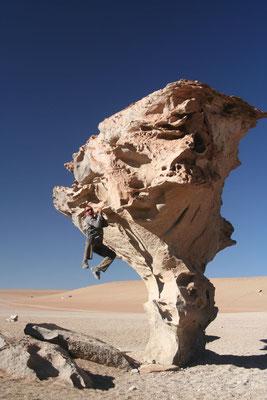 Arbol de Piedra - Valles de Rocas