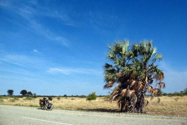 Heading for Maun - Near Gweta