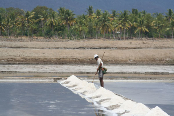 Saltworks west of Bima - Eastern Sumbawa