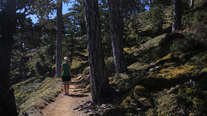 Hiking Atalanti Trail - Troodos Mountains