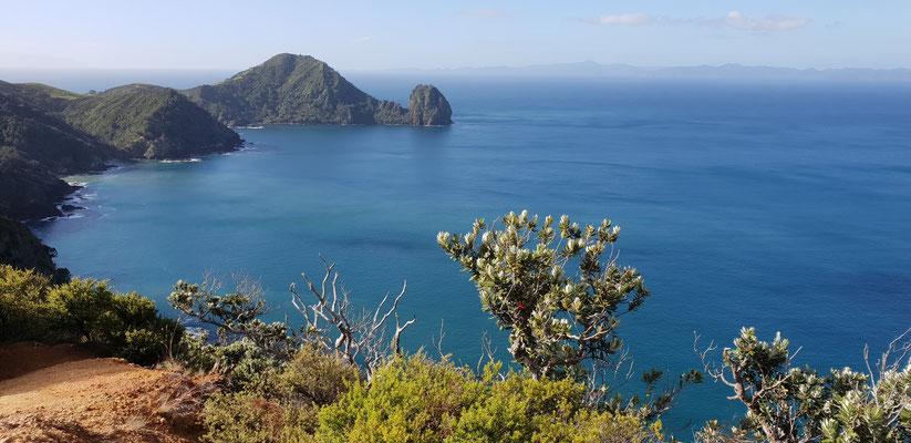 Coromandel Walkway - Coromandel Peninsula - North Island