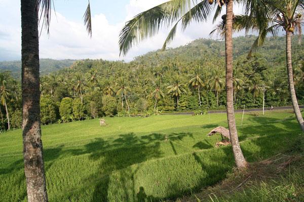 Cycling Western Bali