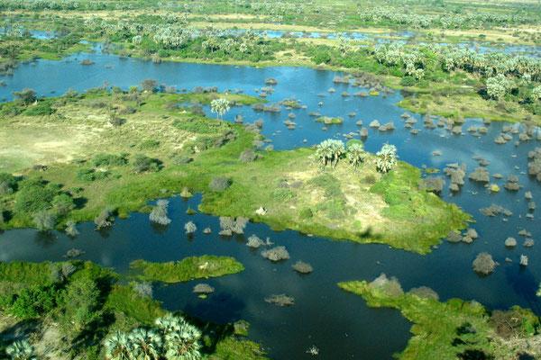Eastern Delta - Okavango Delta