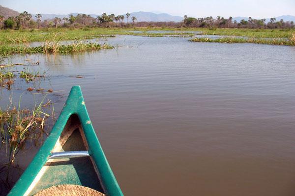 Shire River - Liwonde National Park