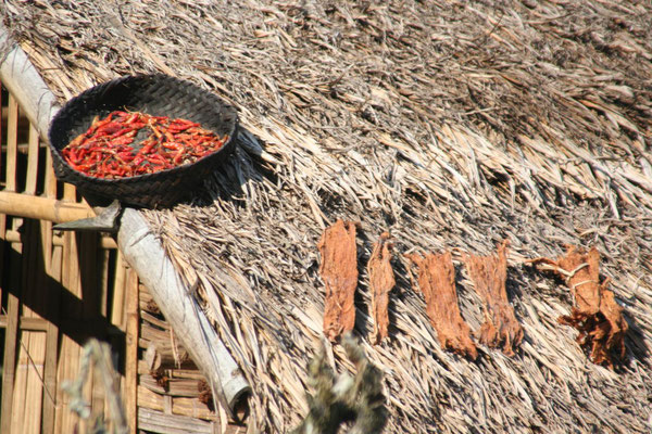 Drying chili - Udomxai Province - Northern Laos