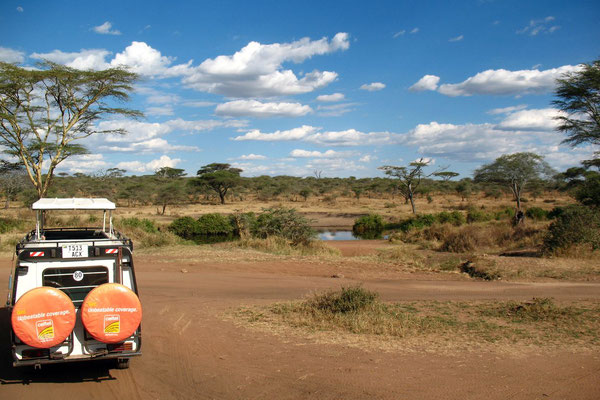 Safari at Serengeti National Park